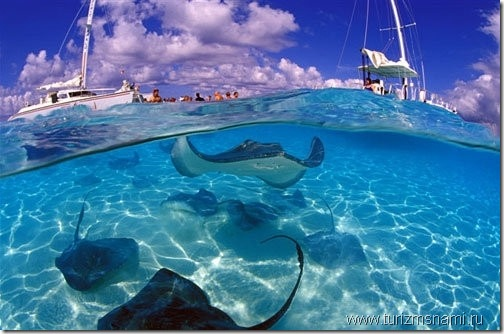 подводный мир Каймановых островов