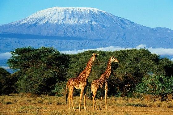 Самый высокий вулкан Африки Килиманджаро