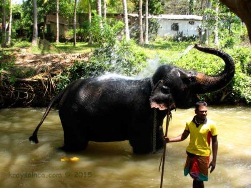 Остров Шри-Ланка. Купание слона