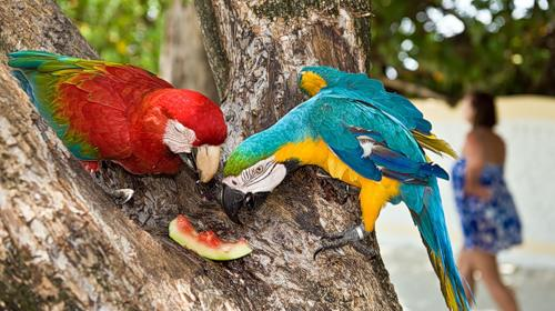 Птицы, Мальдивы