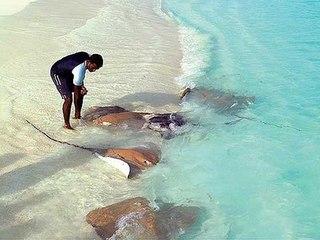 Погода на Мальдивах в ноябре