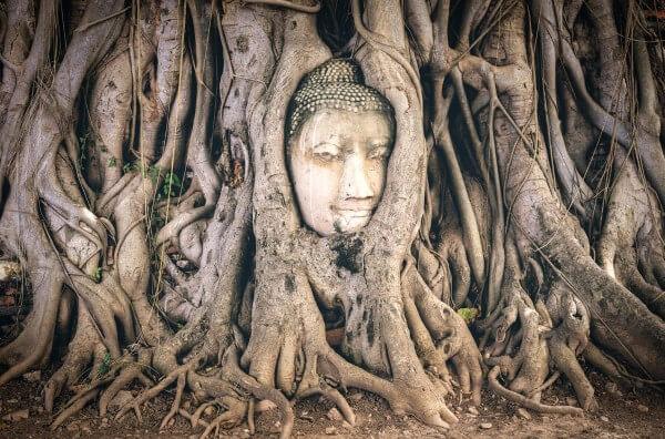 Фото: Аюттхая - голова Будды в корнях